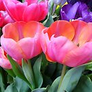 Colorful Tulips by WildestArt