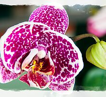 Single Orchid by pjphoto181
