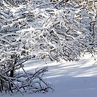 Snow covered bushes. by crspix