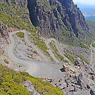 Jacobs Ladder, Ben Lomond, Tasmania, Australia by Margaret  Hyde