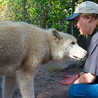 Petting a Wolf by Imagery