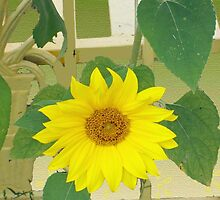 Arbor Bench Sunflower by DesignDorice