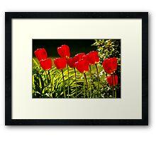 tulip impressions Framed Print