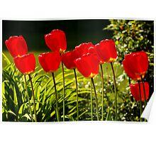 tulip impressions Poster
