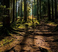 Black Forest near Baiersbronn, Germany by Mark Bangert