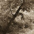 Sepia Tree by WildestArt