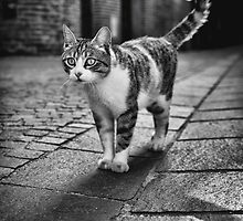 Cat in Albi streets, France by Cédric Tourasse