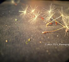 Wish* by TLA-Photography