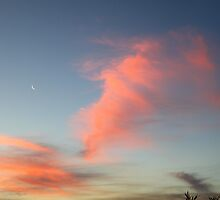Sunset Moon by Jenelle  Irvine