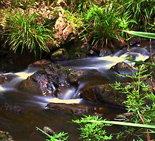 Rainforest Water Stream by jimrac