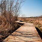 Wooden path by DavidCucalon