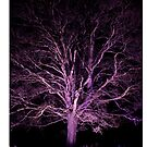 Westonbirt V - iPad Case by Natalie Broome