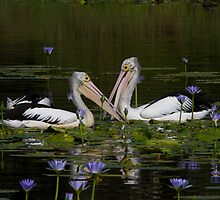 Feeding In The Lilypond by byronbackyard