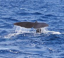 Pot Whale Fluke Greeting by stine1
