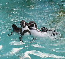 Penguins playing in the Water by stine1