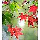 Autumn Leaves 5 - iPad Case by Natalie Broome