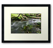 Stream in the Woods Framed Print
