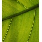 Leaf Abstract 2 - iPad Case by Natalie Broome