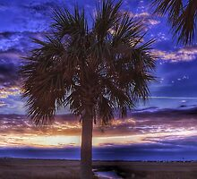 Rising Palm by cking1224