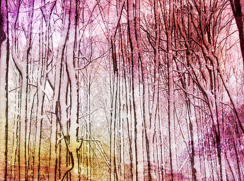 Snow Twigs by Kathilee
