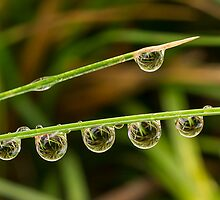 Water Drops with Reflection by Mariola Szeliga