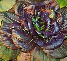 Leafy greens by ♥⊱ B. Randi Bailey