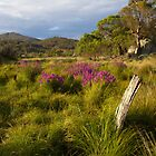 Namadgi National Park, Australian Capital Territory, 2014 by Graham Schofield