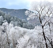 Frosted  by Danny Key