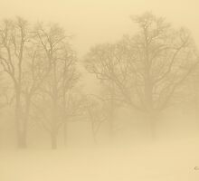 Foggy Sepia Trees by Gilda Axelrod