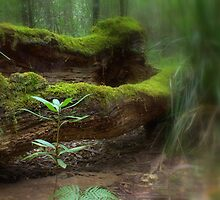 Mossy Log by jimrac