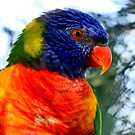Technicolour Lorikeet by margotk