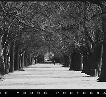 Christchurch Trees by JamieYoungPhoto