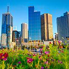 Melbourne City Wildflower by Dean Prowd Panoramic Photography