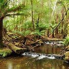 Russell Falls Creek by Cynthia Harris