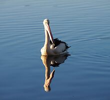 The Pelican by candysfamily