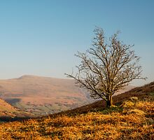 Brecon Beacons Landscape by Nick Jenkins