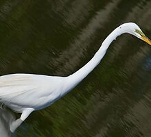 Great Egret at a Slant by bman48