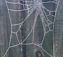 Frosty Spiderweb Phone Case by jamesmachin