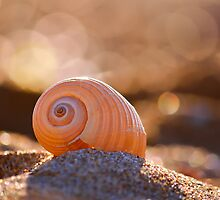 Shell bokeh by Kostas Kalomiris