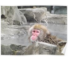 Snow Monkey, Central Park Zoo, New York City Poster