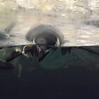 Swimming Penguins, Central Park Zoo, New York City by lenspiro