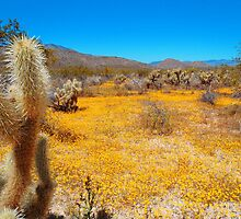 Anza Borrego Desert in Bloom by jasonvanliere83