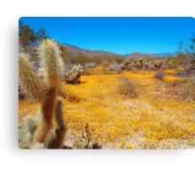 Anza Borrego Desert in Bloom Canvas Print