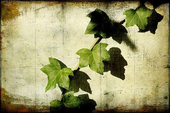 Ivy by Ellen Cotton