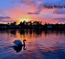 Swan at Sunset Mother's Day Card by Paula J James