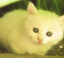 Cute white kitten by AlexandraDzh