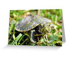 Baby Painted Turtle Greeting Card