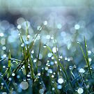 Fairy Drops Aqua Blue by Astrid Ewing Photography