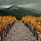 Viñas de Poblet / Wine valey from Catalonia by MASF