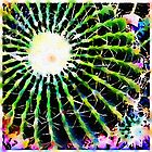 Barrel Cactus III by Roger Passman